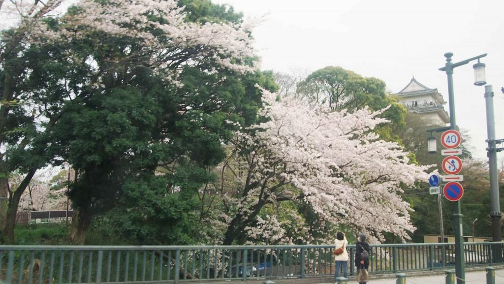 小田原駅の近くには、難攻不落と言われた小田原城がある